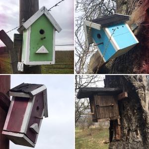 Nisthilfen für Vögel